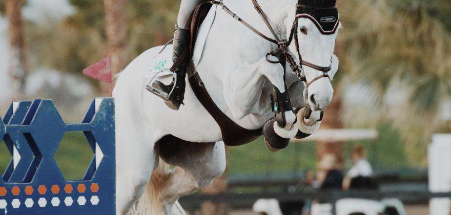 Cannes International Show Jumping